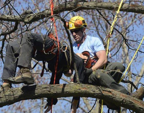 tree rescue