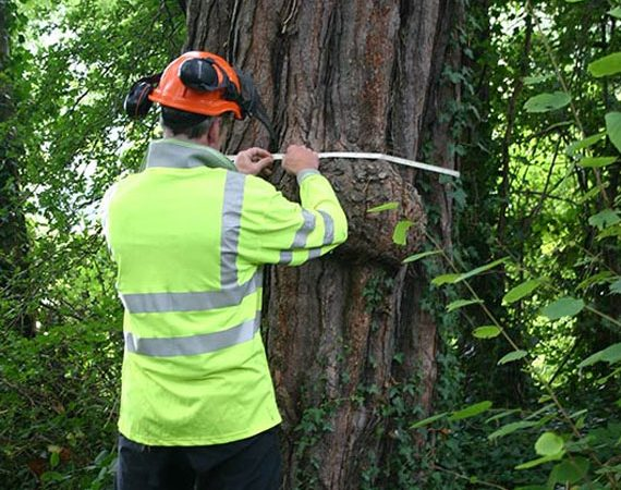 tree survey